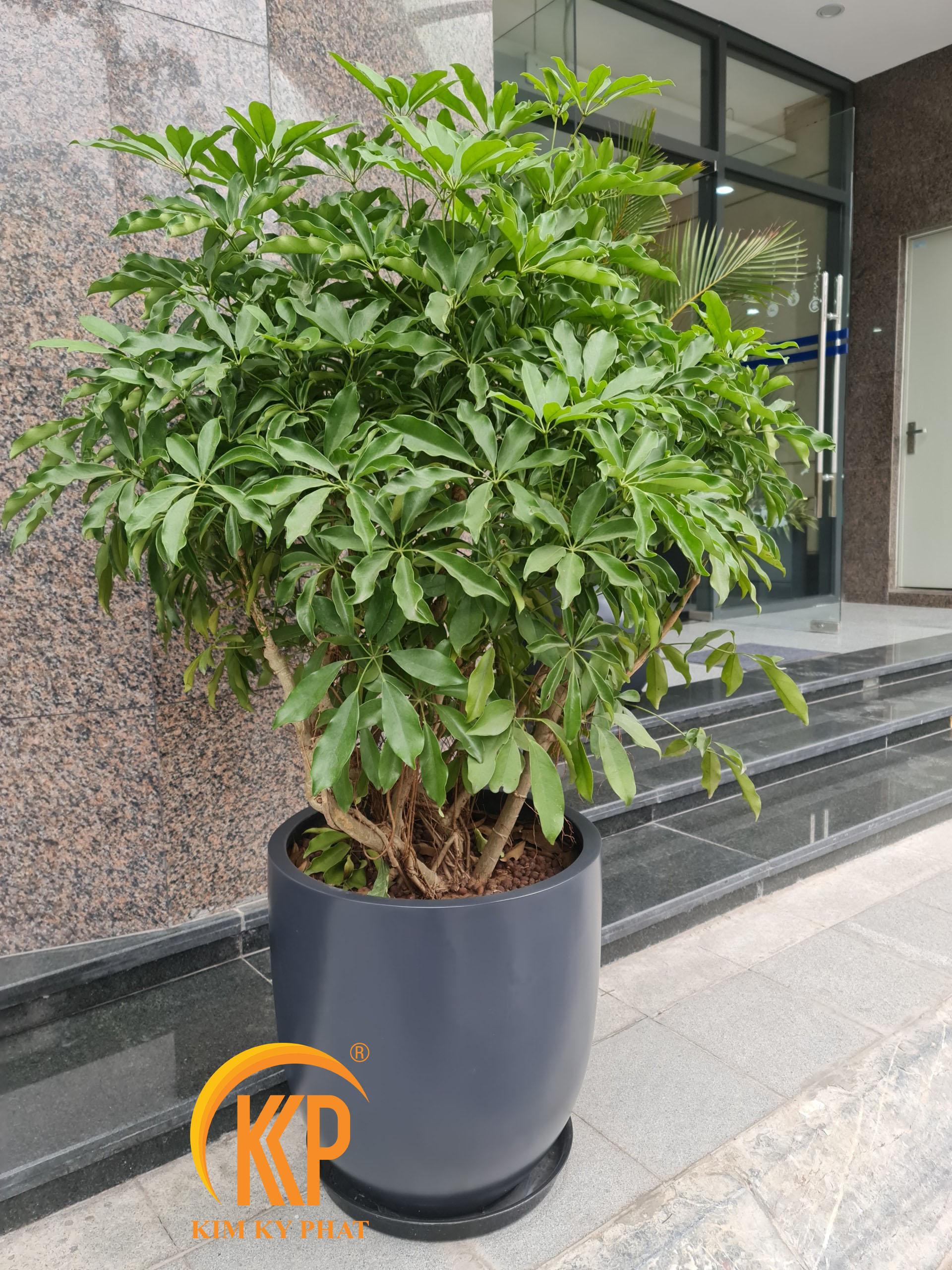 nơi bán chậu composite trồng cây